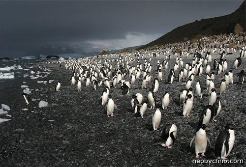 Вулкан Браун Блафф и пингвины