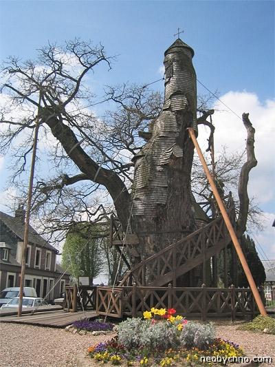 Священный 1000-летний дуб