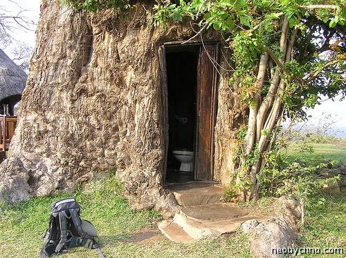 Туалет в стволе баобаба