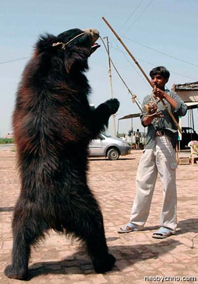 Как приручить медведя-убийцу