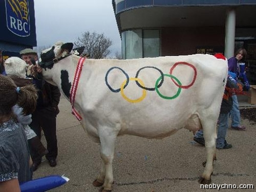 Татуированная корова