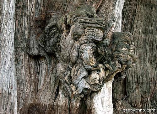 Мексиканское древо жизни