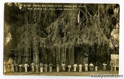 Дерево обнимает людей