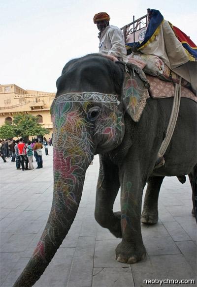 Татуированный слон