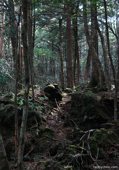 Темный лес Аокигахара