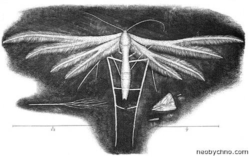 Микрография Гука