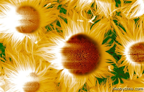 микроскопические цветы фото