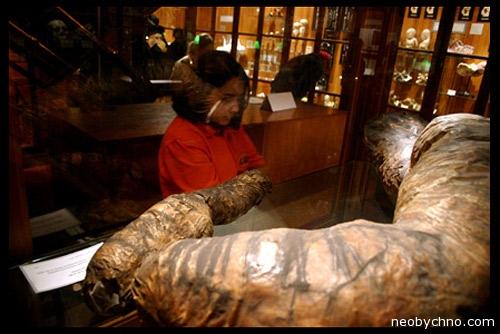 Человеческий кишечник в музее