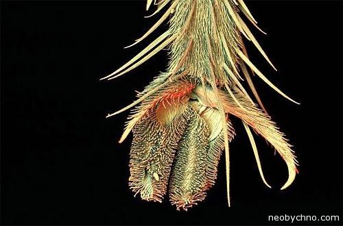 лапа мухи под микроскопом фото