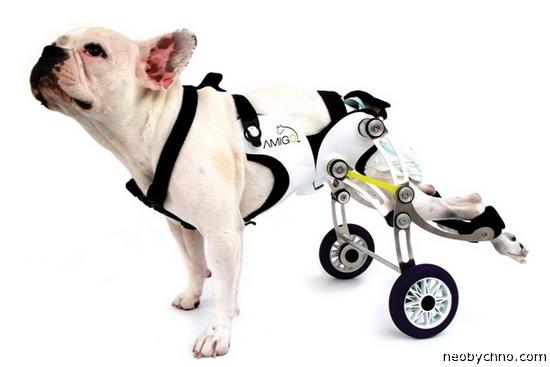 собачья инвалидная коляска