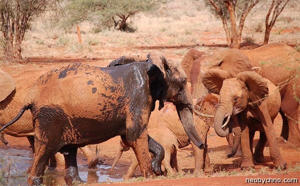 Красные слоны и белые негры черной Африки