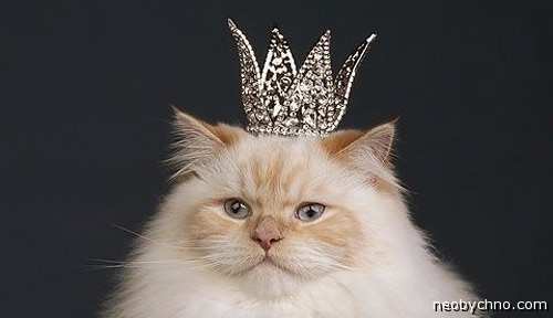 http://neobychno.com/img/2013/06/00-cat-is-king.jpg