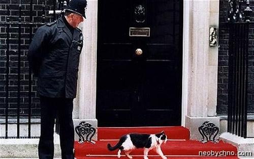 Главный кот Англии