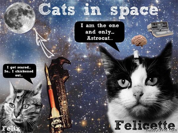 Французские космические коты
