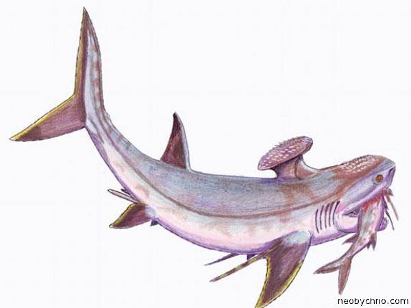 акула с дурацким плавником