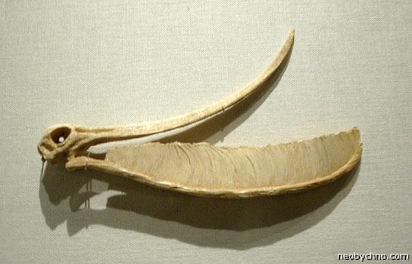 Зубная щетка птерозавра