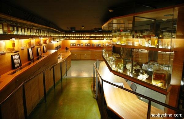 Музей мозгов