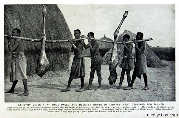 Мясо жирафа