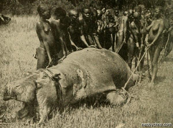 Охотники на бегемотов