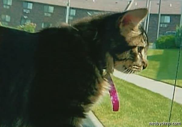 Кот по имени Чарльз