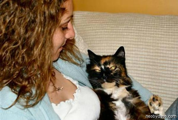Кошка Дикси много лет гуляла