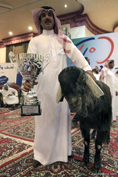 Я и мой призер-козёл