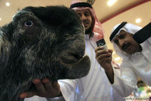 Козел-мутант на выставке в Аравии