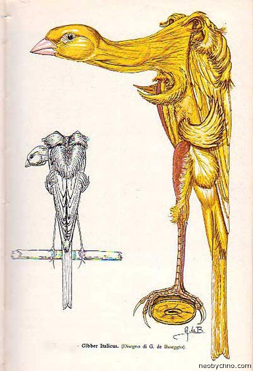 Картинки по запросу новой породой канарейки — Gibber Italicus