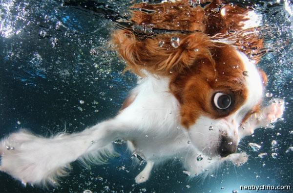 Щенок под водой