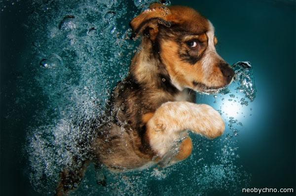 Необычный календарь со щенками в воде