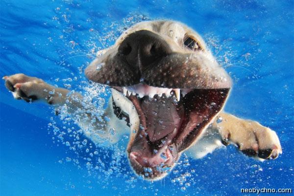 Лучший собачий календарь 2015