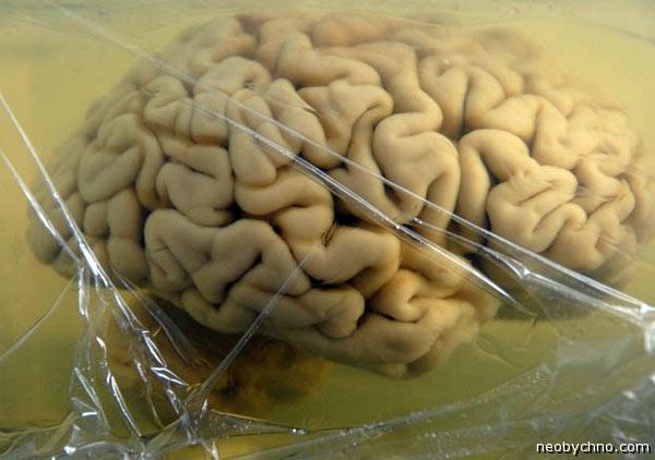 Мозг для оцифровки