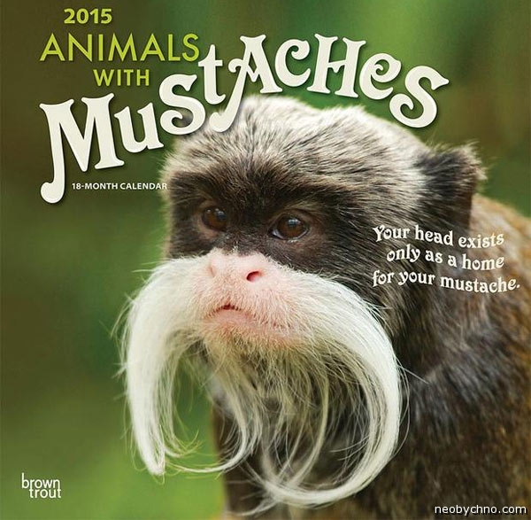 Аnimals-with-mustaches