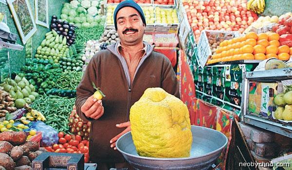 Гигант лимон из Пакистана