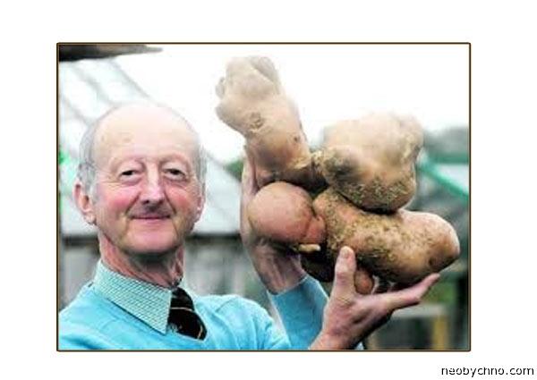 Глейзбрук и его гигантская картошка