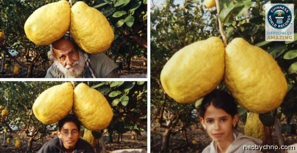 Лимоны из Израиля
