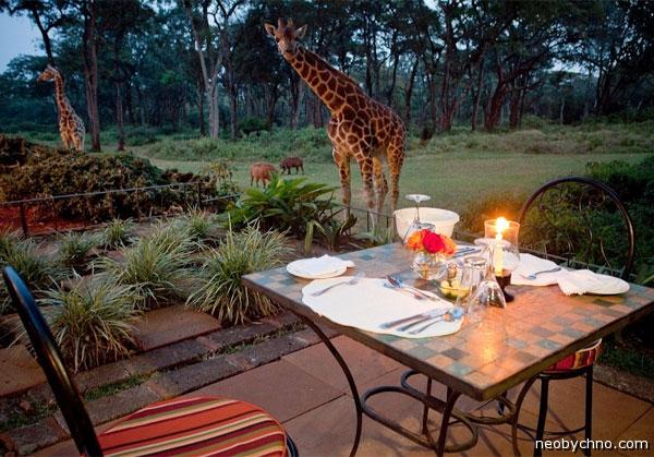 Жираф попрошайка