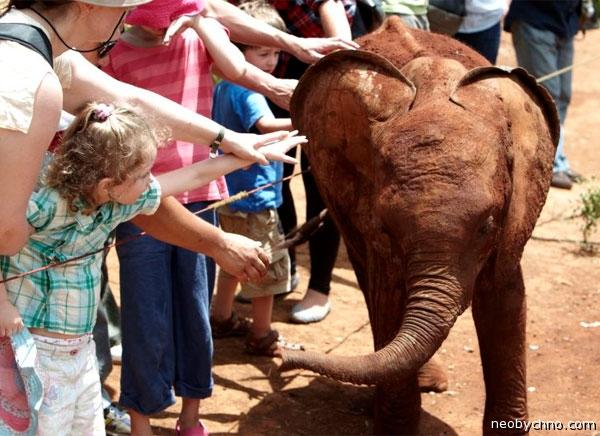Купите слона