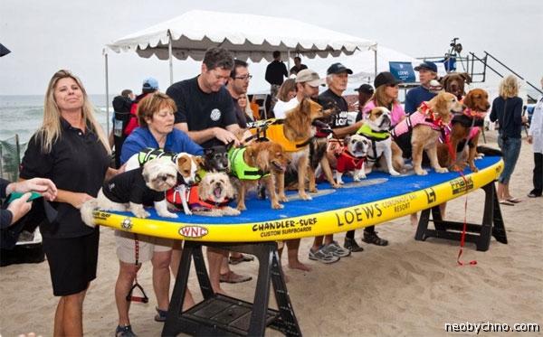 Собачий курорт в Калифорнии