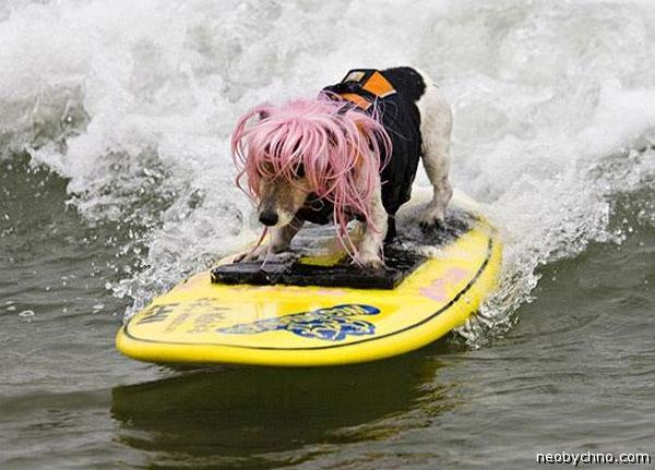 Собачий сёрфинг