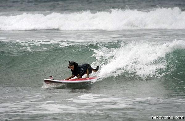 Соревнование по серфингу