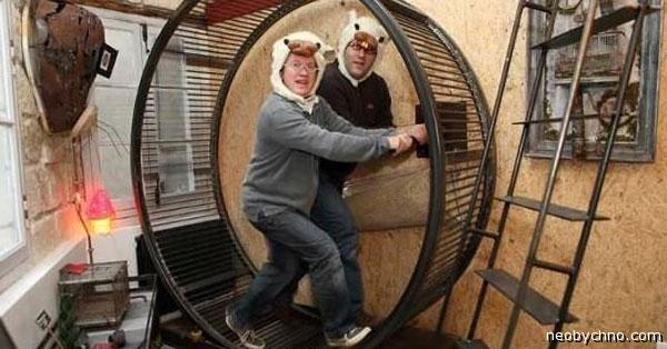 Хомячки в колесе