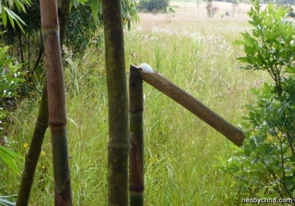 Бамбуковое вино уланзи