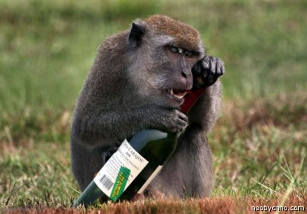Алкогольная обезьяна