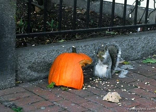 Фестиваль белок в Хеллоуин