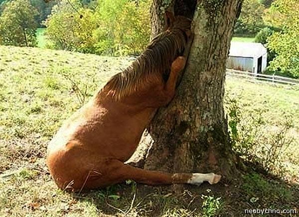 Лошадь наркоманка