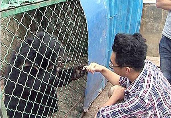 Медведи в виде собак
