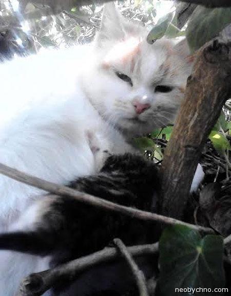Кошка в гнезде голубей