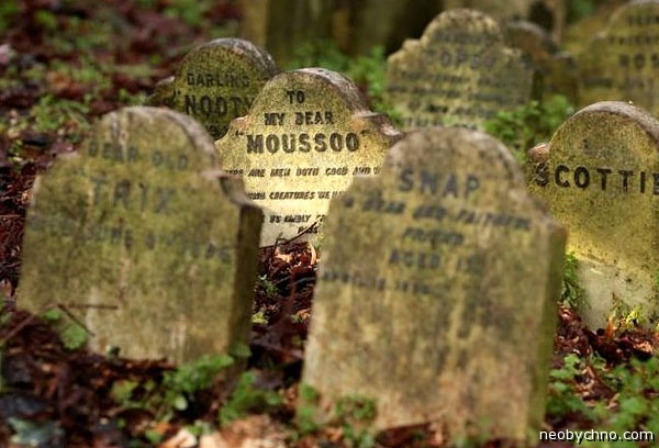Кладбище животных в Лондоне