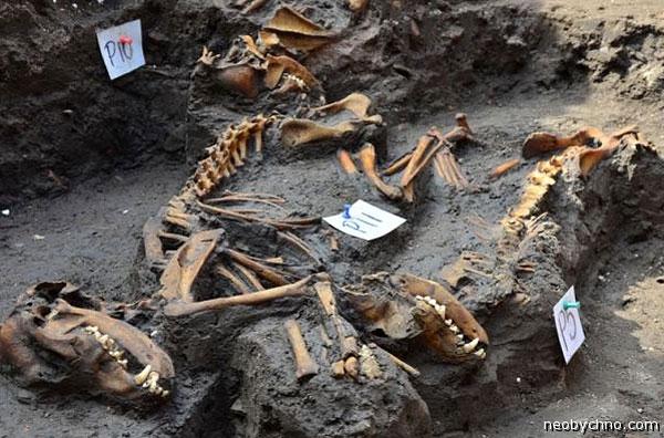 Ацтекская собака в моглиле